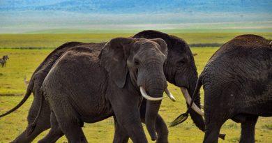 Faire un safari en Tanzanie : Quels sont les grands événements à vivre ?