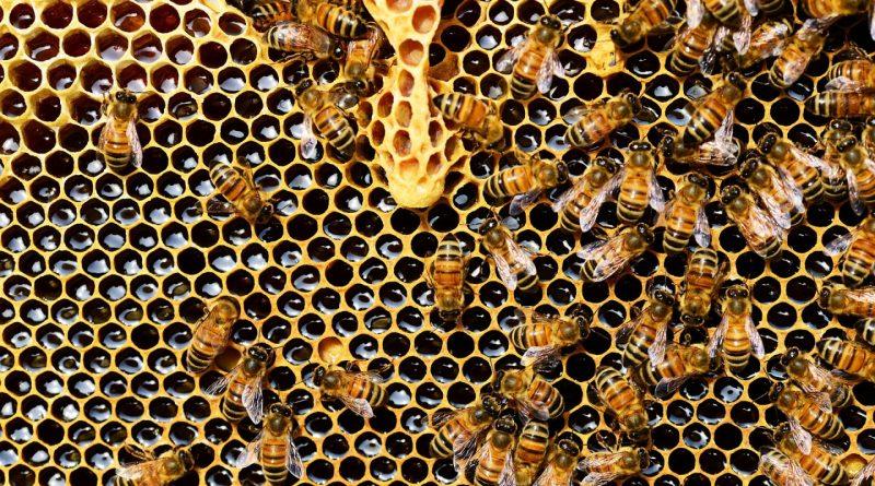 Les bienfaits du parrainage d'une ruche d'abeilles